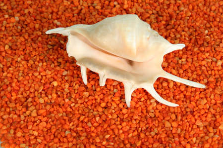Shell on orange crystals of sea salt background photo