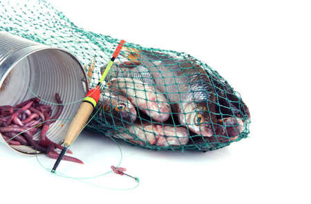 Fishes in fishing net isolated on white photo