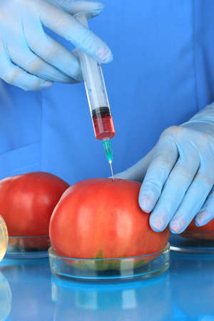 Scientists make injection into fresh red tomato in laboratory photo