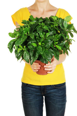 Beautiful flower in pot in hands of girl isolated on white photo