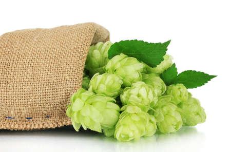 Fresh green hops in burlap bag, isolated on white photo