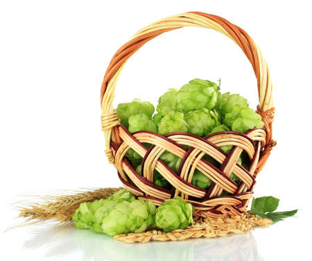 Fresh green hops in wicker basket and barley, isolated on white photo