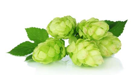 bitterness: Fresh green hops, isolated on white Stock Photo