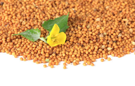Mustard seeds with mustard flower isolated on white  photo