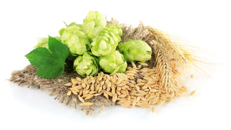 Fresh green hops and barley, isolated on white photo