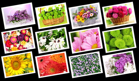 Collage of beautiful flowers Stock Photo - 22282667