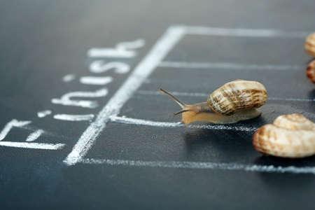 gastropod: Racing snails close-up