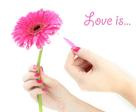 and guessing: Woman hands guesses on pink gerbera, isolated on white
