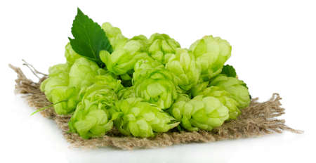 Fresh green hops, isolated on white photo