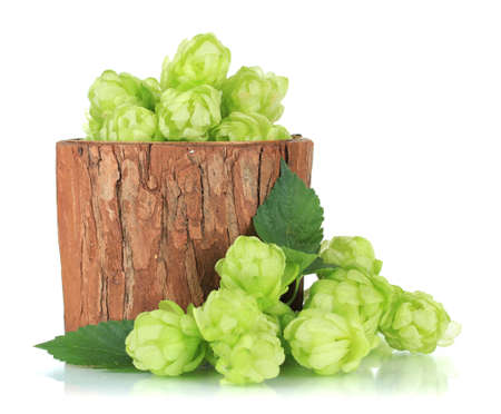 humulus: Fresh green hops in wooden vase, isolated on white Stock Photo