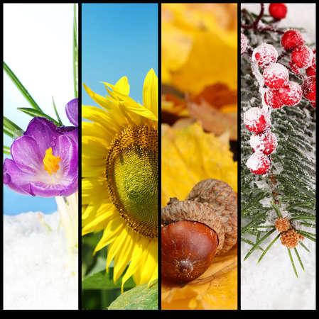 Four seasons collage photo