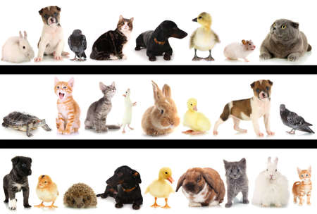 chiot et chaton: Collage de diff�rents animaux mignons Banque d'images