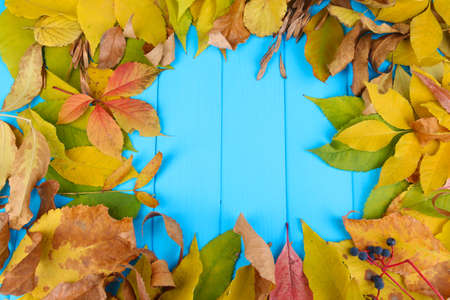 Bright autumn leaves on blue wooden board background photo