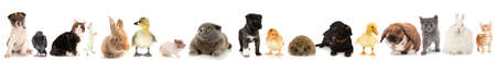 Collage de différents animaux mignons Banque d'images - 22789635