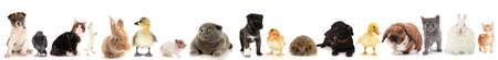 lapin: Collage de différents animaux mignons Banque d'images