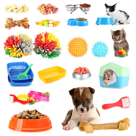 them: Collage of pets and different stuff for them