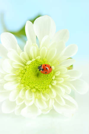 Beautiful ladybird  on flower, close up photo