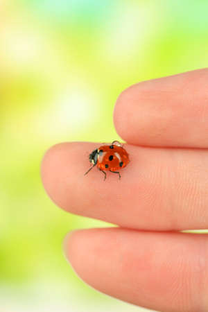 Beautiful ladybird on hand, close up photo