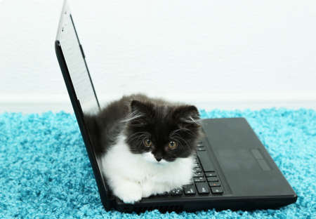 Little cute kitten and laptop  on carpet photo