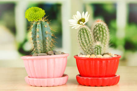 Cactuses in flowerpots with flowers, on wooden windowsill photo