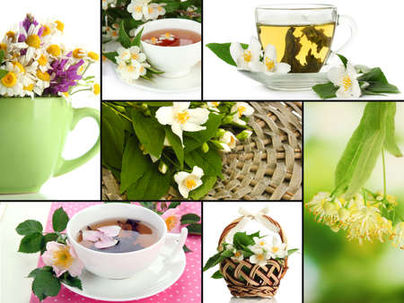 Collage of healthy green tea photo