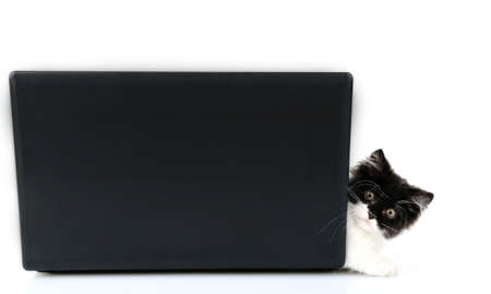 Little cute kitten and laptop, isolated on white photo