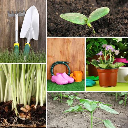 Collage of gardening theme photo