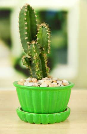 Cactus in flowerpot, on wooden windowsill photo