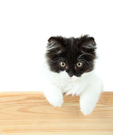 Little cute kitten with empty board , isolated on white photo