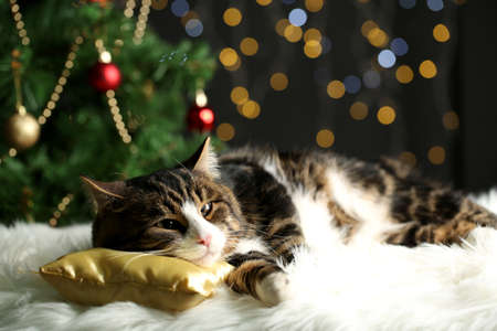 Cute cat lying on carpet with Christmas decor photo
