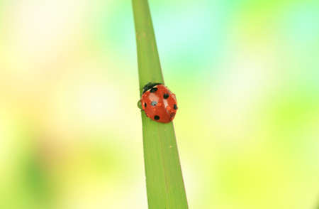 Beautiful ladybird on green grass, close up photo