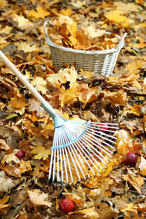 Cleaning of autumn leaves in park photo