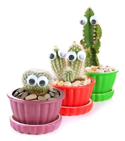 Cactuses in flowerpots with funny eyes, isolated on white