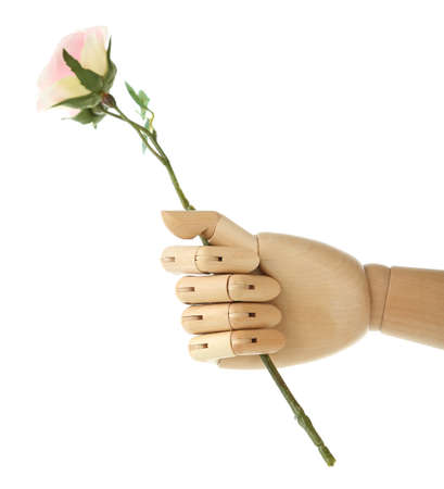 Rose in wooden hand isolated on white photo