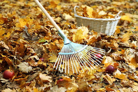wicker work: Cleaning of autumn leaves in park