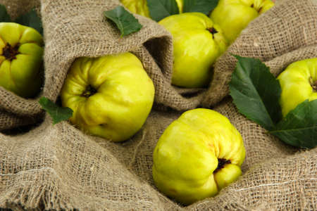 quinces: sweet quinces with leaves, on burlap background Stock Photo