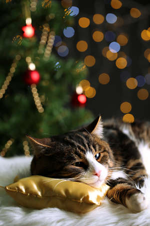 Cute cat lying on carpet with Christmas decor Stock Photo - 24125039
