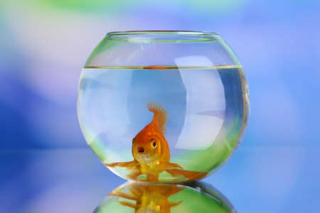 goldenfish: Goldfish in aquarium on natural background