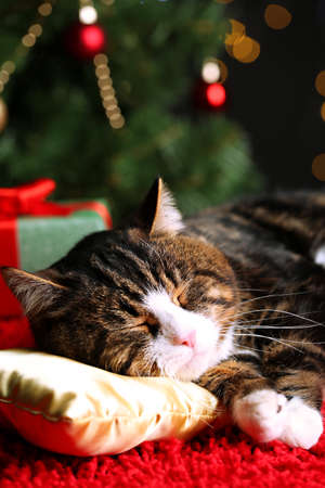 Cute cat lying on carpet with Christmas decor Stock Photo - 24144311