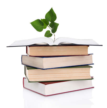Books with plant isolated on white photo