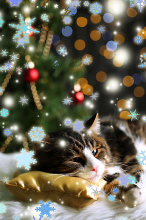 Cute cat lying on carpet with Christmas decor Stock Photo - 24207240