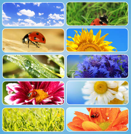 Collage of beautiful nature photo
