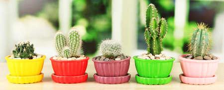 Cactuses in flowerpots, on wooden windowsill photo