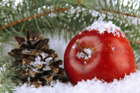 Red apple with fir branches and bumps in snow close up Stock Photo
