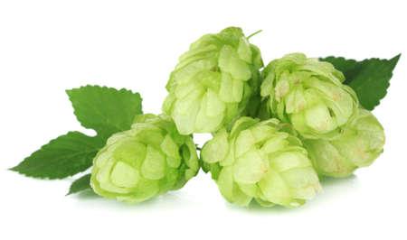 Fresh green hops, isolated on white photo