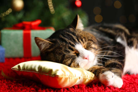 new year cat: Cute cat lying on carpet with Christmas decor
