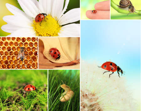 Collage of insects and flowers photo