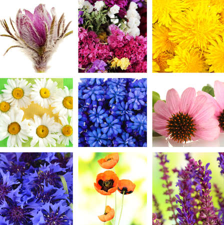 pulsatilla: Wildflowers collage