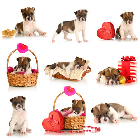 Collage of cute puppy isolated on white photo