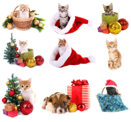 Christmas animals isolated on white photo